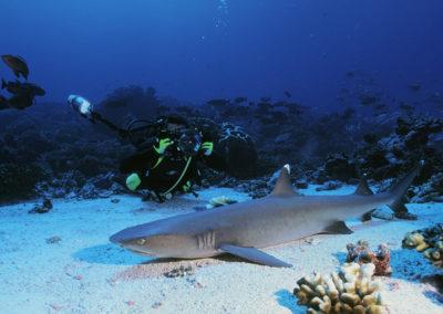 11-Moorea-Dive-Center-Copyright-Sylvain-Girardot