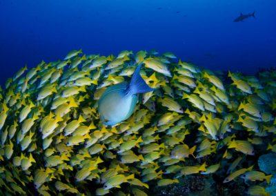 Plongée avec Topdive à Fakarava
