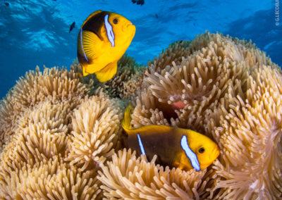 Poissons à Bora Bora en plongée avec Topdive
