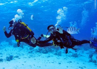 Plongée sous-marine à Bora Bora avec Topdive