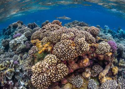 La beauté du récif de corail