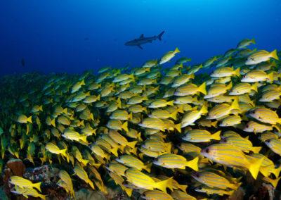 Des espèces de poissons de récif