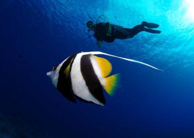 Plongeur et poisson à Bora bora - Topdive - copyright-frederique-legrand