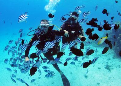 Plongée parmi des centaines de poissons à Tahiti