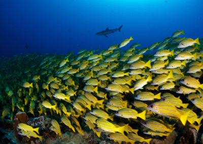 Faune subaquatique de Fakarava Sud - Topdive