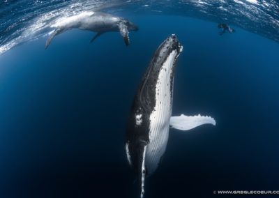 Baleine à Bosse de Polynésie - Topdive