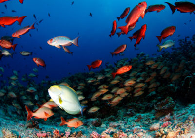 Faune sous-marine du spot de Ali Baba en Polynésie avec-Topdive Fakarava