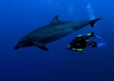 Le grand dauphin - topdive