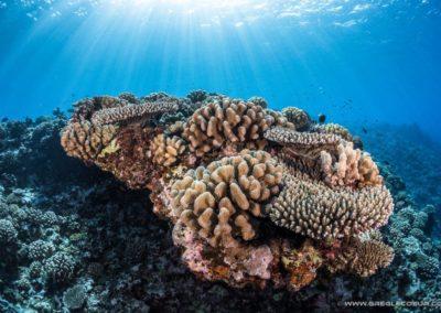 Massif de Corail - Topdive Moorea