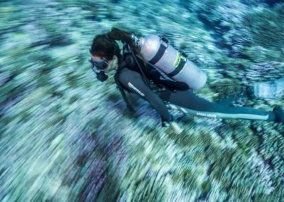 Plongée au Nitrox à Rangiroa avec TOPDIVE
