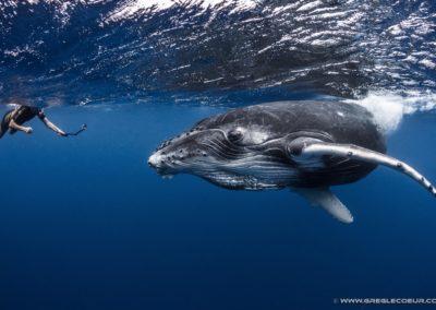 Baleines à bosse à Tahiti - Topdive