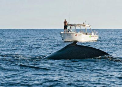 Nageoire dorsale de la baleine à bosse à Tahiti - Topdive